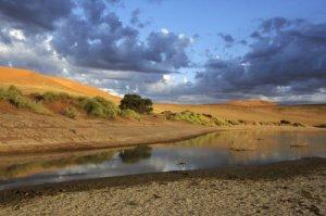 Bias on the internet: Namib desert after rain.