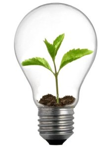 Weakening America: sprout in a light bulb.